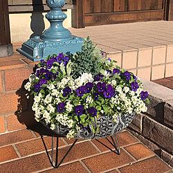 お花のある暮らし/ガーデニング/寄せ植え/玄関/入り口のインテリア実例 - 2020-12-05 21:53:28