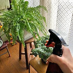 ツデー/スプレーボトル/霧吹き/植物/グリーンのある暮らし...などのインテリア実例 - 2021-01-18 12:26:37