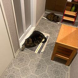 猫/ねこ/ねこのいる日常/まるちゃん /ねこと暮らす。...などのインテリア実例 - 2021-06-19 21:42:02