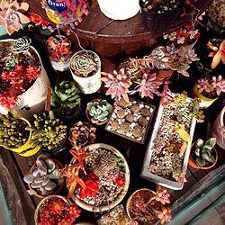 玄関/入り口/多肉植物/電線ドラム/リメ缶/ジャンクガーデンのインテリア実例 - 2015-02-13 14:14:41