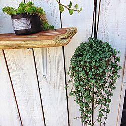 玄関/入り口/門柱カバー/流木棚/植物/DIY...などのインテリア実例 - 2014-11-11 09:42:05