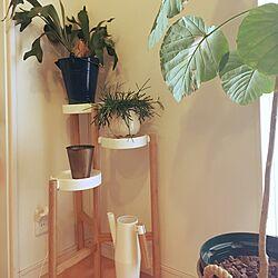 植物のある暮らし/コウモリラン/IKEA/初投稿/観葉植物...などのインテリア実例 - 2017-04-18 07:44:04