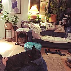 観葉植物/照明/部屋全体のインテリア実例 - 2021-01-24 08:53:57