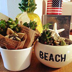 棚/多肉植物/多肉植物寄せ植え/beach/HAWAIIのインテリア実例 - 2014-05-15 12:50:31