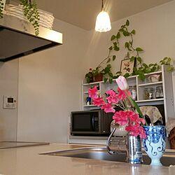 キッチン/花のある暮らし/グリーンのある暮らし/観葉植物/かご...などのインテリア実例 - 2017-03-13 17:40:43