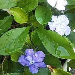 植物の成長記録/秋の気配✨/晴天のインテリア実例 - 2020-09-19 07:21:51