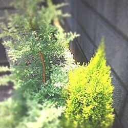 植木のインテリア実例 - 2013-07-12 08:28:14
