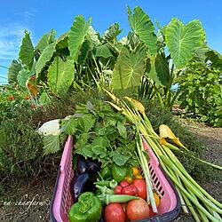 平穏な毎日に感謝/植物のある暮らし/いつもいいねやコメントありがとう♡/自然を感じる暮らし/美味しいものが好き...などのインテリア実例 - 2020-08-11 14:51:17