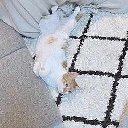 猫のいる部屋/猫スペース/マンション暮らし/猫との暮らし/ニトリ...などのインテリア実例 - 2020-04-07 12:28:40