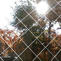 紅葉/ベランダから/ガラス窓/景色のインテリア実例 - 2012-12-06 10:28:23