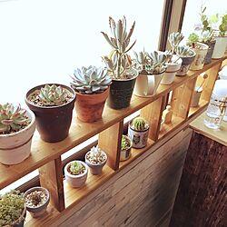 キッチン/植物棚/DIY/リメイクシート/キッチン...などのインテリア実例 - 2017-07-01 14:32:35