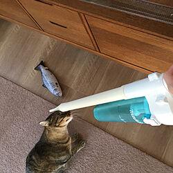 マキタ掃除機/猫との生活/猫のいる日常/猫/ねこ...などのインテリア実例 - 2019-11-08 21:59:26