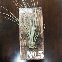 机/セリア/100均/ダイソー/観葉植物...などのインテリア実例 - 2015-04-01 14:52:42