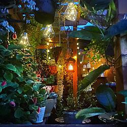 ウッドデッキにパーゴラ/2021.9.16/木のある暮らし/癒しの空間/庭...などのインテリア実例 - 2021-09-16 20:37:57