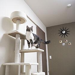 ベッド周り/猫/ねこ部/猫と暮らすマンション/猫のいる日常...などのインテリア実例 - 2021-03-02 09:27:34