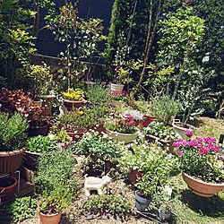玄関/入り口/庭/100均/癒し/花のある暮らし...などのインテリア実例 - 2021-05-04 11:51:50