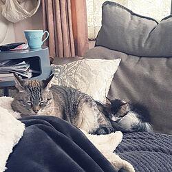 リビング/猫のいる生活/子猫のインテリア実例 - 2017-09-18 11:05:47