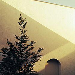 壁/天井/植物/カメラマークが気になって/コートハウス/光...などのインテリア実例 - 2014-04-29 07:48:13