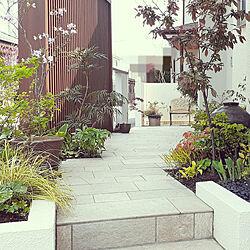 玄関/入り口/自分で植えた木と草花/ふるいものが好き/庭の花/庭...などのインテリア実例 - 2020-05-02 14:53:49