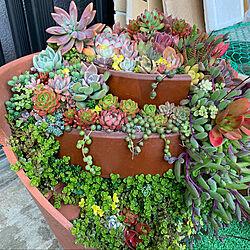 セダム♡/エケベリア♡/割れ鉢リメイク❤️/多肉植物寄せ植え/植物のある暮らし...などのインテリア実例 - 2021-03-17 02:02:57