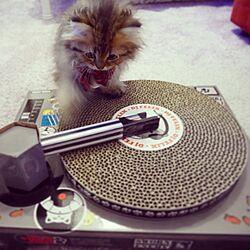 リビング/DJブース/爪研ぎ/ひとりぐらし ( +ねこ )/ペルシャ猫...などのインテリア実例 - 2016-02-19 13:21:27