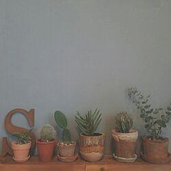 NO GREEN NO LIFE/しゃれとんしゃあ会/関西好きやねん会/IGと同じpic!/植物...などのインテリア実例 - 2015-05-23 10:33:52
