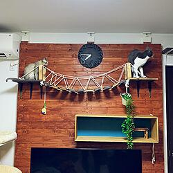 壁/キャットウォーク/吊り橋/DIY/壁/天井のインテリア実例 - 2020-03-09 23:30:48