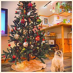 クリスマス/北欧/輸入住宅/北欧住宅 /ねこのいる日常...などのインテリア実例 - 2020-11-19 01:37:35