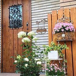 玄関/入り口/玄関前 ガーデニング/外壁/花が好き/アナベル...などのインテリア実例 - 2019-01-31 20:33:38