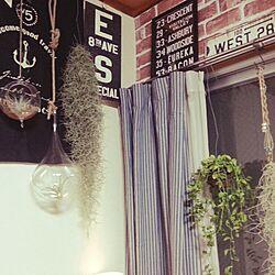 壁/天井/エアプランツ♡/いなざうるす屋/せりあ レンガ/ぷらんとハンガー...などのインテリア実例 - 2015-05-21 17:41:41