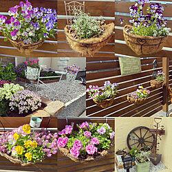 ガーデン雑貨/花壇/玄関ガーデン/庭のある暮らし/玄関...などのインテリア実例 - 2021-07-04 22:05:07
