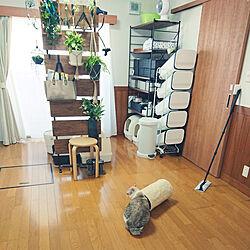 部屋全体/観葉植物のある暮らし/雑貨/観葉植物/猫と観葉植物...などのインテリア実例 - 2021-01-01 11:00:41