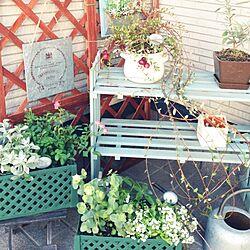 玄関/入り口/一人暮らし/植物/雑貨/DIY...などのインテリア実例 - 2014-11-14 00:01:44