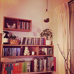 壁/天井/あざらし/しろくま貯金箱/CD収納/CD...などのインテリア実例 - 2016-02-29 07:20:30