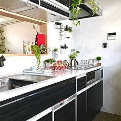 キッチン/キッチン周り/タカラスタンダード/エマージュウォルナットブラック/花と緑のある暮らし...などのインテリア実例 - 2018-10-20 20:21:45