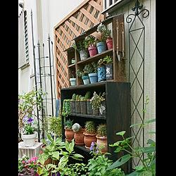 キッチン/庭/ガーデン/ガーデニング/西側の庭...などのインテリア実例 - 2020-09-01 11:37:08