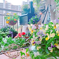 ニトリ2019ベランダガーデンモニター/ベランダガーデン/ニトリ/お気に入り/花のある暮らし...などのインテリア実例 - 2019-04-19 18:15:01