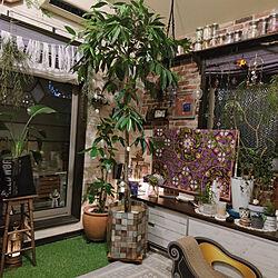 部屋全体/シンボルツリー/ショウナンゴムノキ アムステルダム/100均 リメイクシート/植物が好き...などのインテリア実例 - 2021-05-11 08:24:49