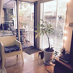 リビング/Francfranc/フィリップ・スタルク/観葉植物/IKEA...などのインテリア実例 - 2018-11-02 17:12:03