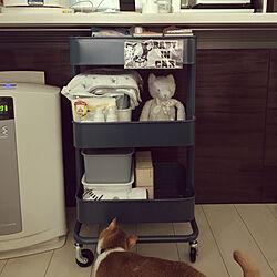 猫のいる生活/赤ちゃん準備品/ベビーワゴン/ジェラートピケ ネコ/IKEA...などのインテリア実例 - 2019-08-10 14:20:44