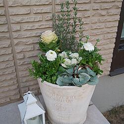 玄関/入り口/ミサワホーム/冬の寄植え/テラコッタ鉢/寄植えの鉢...などのインテリア実例 - 2018-11-25 16:23:47