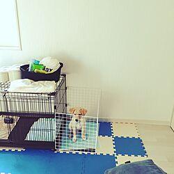 アイリスオーヤマ/愛犬と暮らす家/KABAROCK/愛犬小鉄♂のインテリア実例 - 2017-07-11 10:15:18