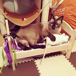 ベッド周り/ペット/IKEAのインテリア実例 - 2014-07-31 13:36:58