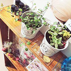 棚/タイル/ワイヤープランツ/観葉植物のある部屋/植物...などのインテリア実例 - 2017-05-22 13:22:52