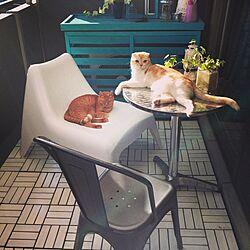 部屋全体/IKEA/イケア/ベランダ/ウッドパネル...などのインテリア実例 - 2014-10-18 15:45:06