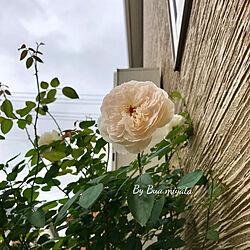 玄関/入り口/小さなおうち/マイホーム/小さな庭/バラが大好き♪...などのインテリア実例 - 2017-08-04 15:41:32