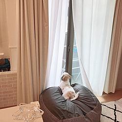 リビング/むじさんのビーズクッション最高/初めての犬との暮らし/犬と寝る部屋/一人暮らし...などのインテリア実例 - 2018-10-11 10:29:27