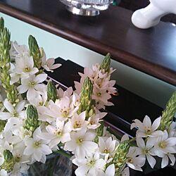 リビング/植物/お花/切り花のインテリア実例 - 2014-01-04 20:39:32