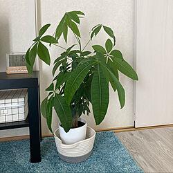 観葉植物/IKEA/シンプル/水色×白/新婚 賃貸...などのインテリア実例 - 2020-11-01 13:17:40