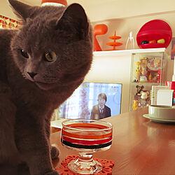リビング/koziol/ネコと暮らす/sirasuさんへ/くりやん...などのインテリア実例 - 2017-12-14 10:08:54